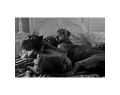 Best Dog Beds For Shedders