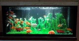 Planted Aquarium Modern Indianapolis By Aquarium Chennai