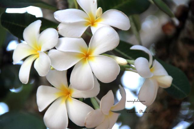 Hawaii traditional-artwork