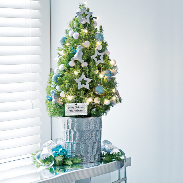 Northern lights tabletop christmas tree 1 gallon - Petit sapin de noel decore ...