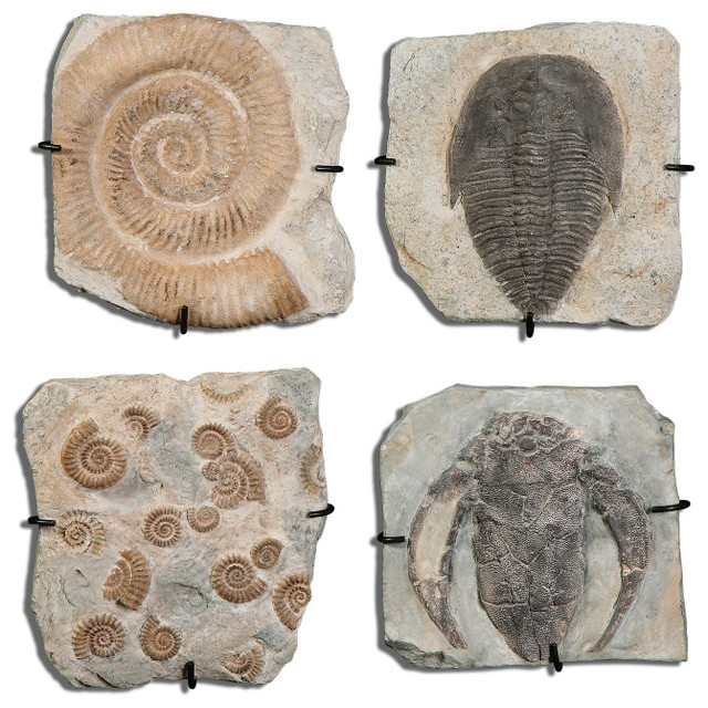Fossil Plaques Wall Art S/4 mediterranean-home-decor