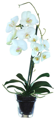 Phalaenopsis Orchid in Glass Pot traditional-artificial-flowers