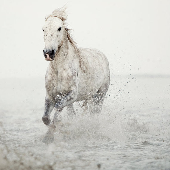 Horse Photograph, White Horse Running by Eye Poetry modern artwork