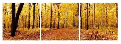 Elementem | Autumn Trees Wall Art modern-artwork