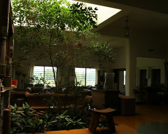 Living room indoor plants design pictures remodel decor and ideas