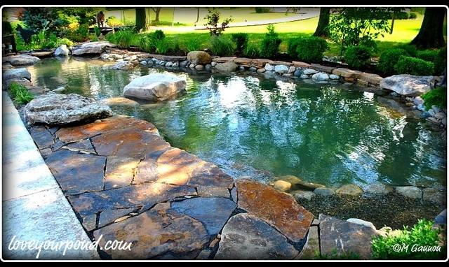 Water Garden Koi Pond by Full Service Aquatics in Bedminster, NJ ...