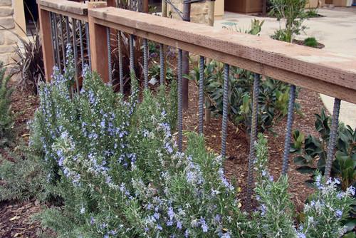 iron balustrades in a garden