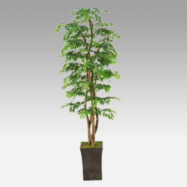 7-Foot Ming Aralia Tree in Square Metal Planter Multicolor - 39224 contemporary-artificial-flowers-plants-and-trees