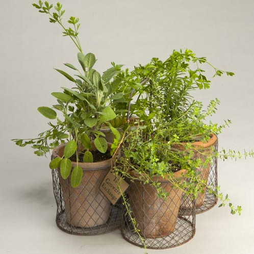 Rustic Herb Garden Kit Contemporary Indoor Pots And