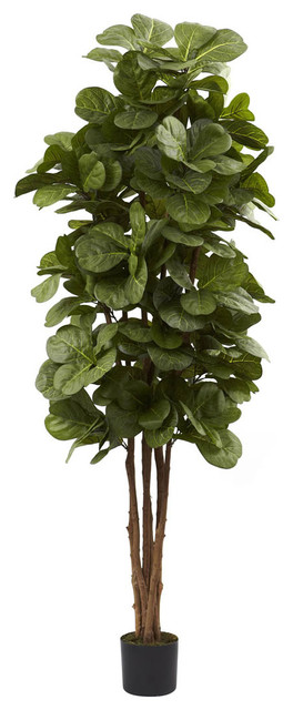 6' Fiddle Leaf Fig Tree contemporary-plants