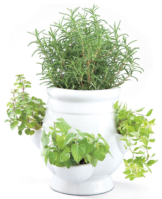 Windowsill Herb Garden Kit Traditional Indoor Pots And