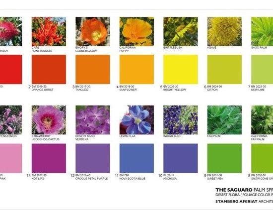 The Saguaro Palm Springs' color palette - Saguaro Pal Springs color palette