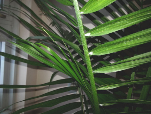 how to kill spider mites on your house plant