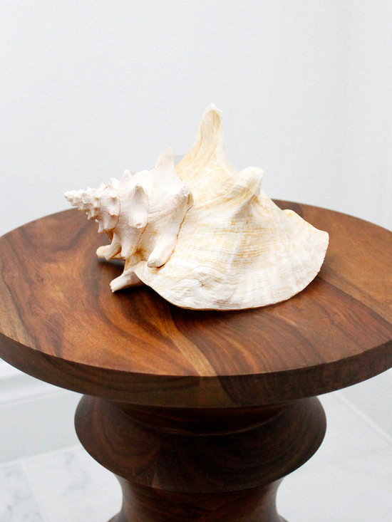 Vintage Decor Accessories - AM Dolce Vita, Vintage Giant Conch Shell, Eames Walnut Stool