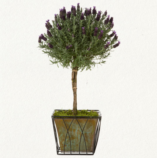 Lavender Topiary traditional-plants