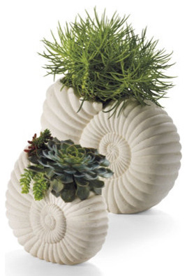 Nautilus Planter - Small traditional-indoor-pots-and-planters