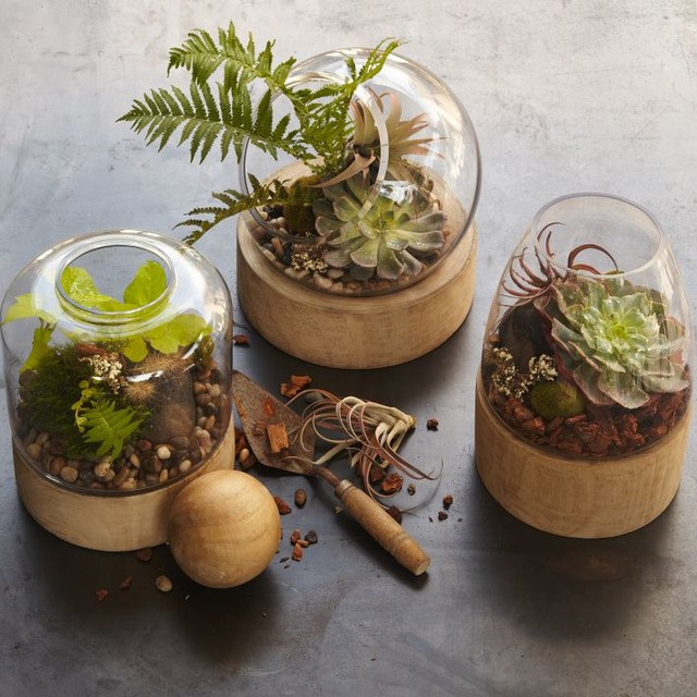 Glass Terrariums with Wood Base