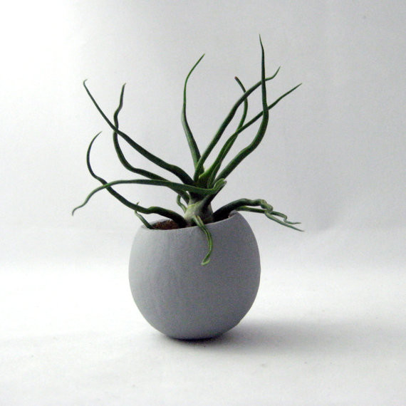 Mini Air Plant Pod, Gray, by Seaandasters plants