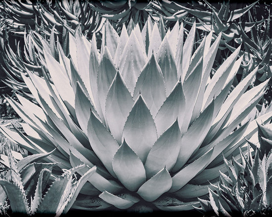 Vintage Photography - This is the Agave Parryi cactus, also known as the Mescal. All original photo with the vintage look of film. This is a black and white image with a tint and film grain. Also framed by a vignette for effect.