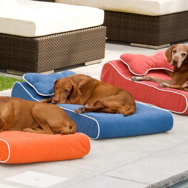Memory Foam Contour Pet Lounger Dog Bed traditional-pet-supplies