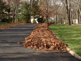 landscape 5 Ways to Put Fall Leaves to Work in Your Garden (9 photos)