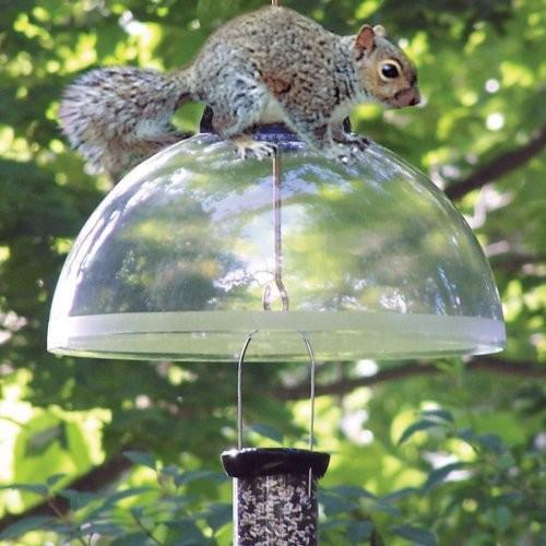 Droll Yankees 15 in. Black Squirrel Guard contemporary-bird-feeders