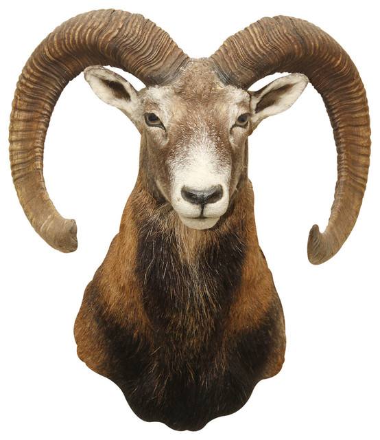 Ram Head, Adhesive Wall Decal - Contemporary - Wall Decals - by WallsNeedLove