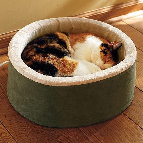 ragdoll kittens for sale michigan