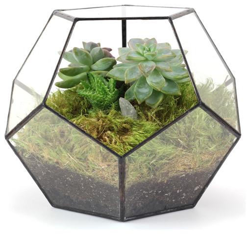 Dodecahedron Terrarium contemporary-terrariums