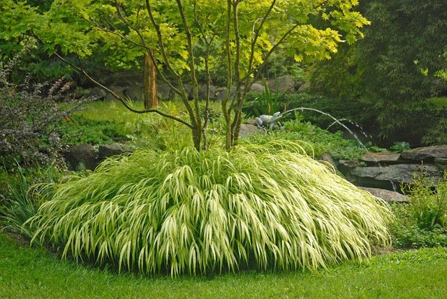Golden japanese forest grass traditional plants for Typical japanese garden plants