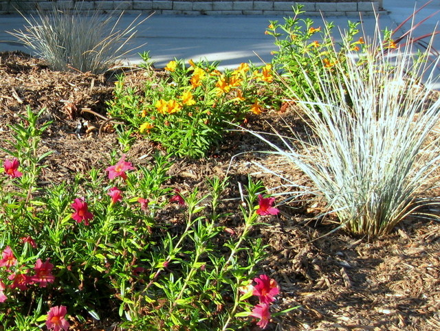 Naples, CA Landscape- The day of installation traditional-landscape