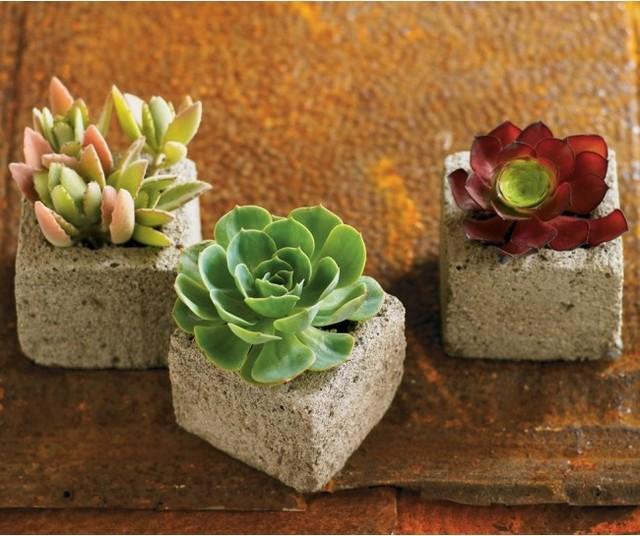 VivaTerra - VivaTerra - Succulent Cube Garden (set of 3) contemporary-vases