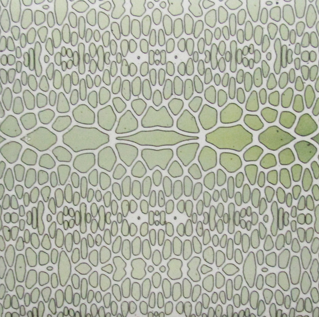 Daltile Ceramic Wall Tile Green Lizard Texture ., 4x4 Wall Tiles Pack of 20, 4x4 contemporary-tile