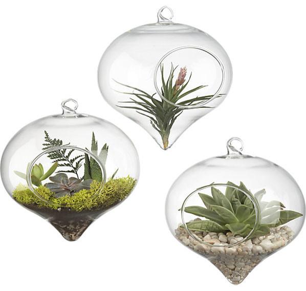 Hanging Glass Terrarium contemporary-terrariums