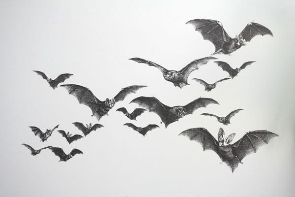 Bats Wall Decals eclectic-wall-decals