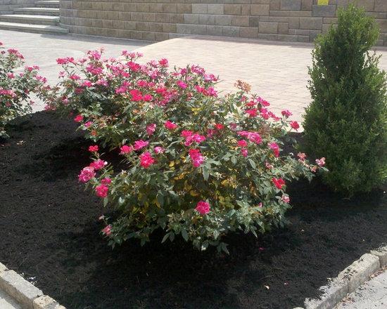 Show Garden -