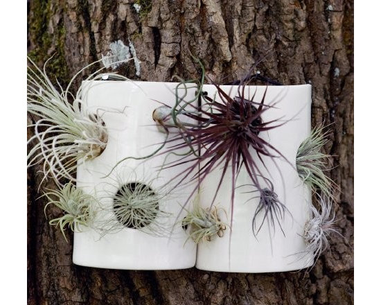 Airplant Wall Tiles from Pigeon Toe -