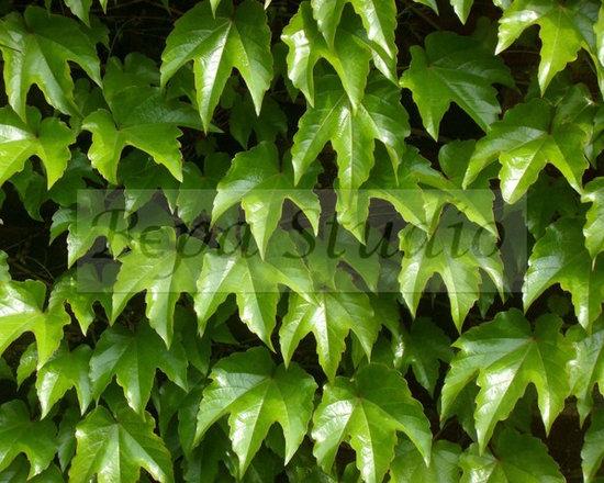 """""""Wall of Leaves"""" - by Bepa Studio -"""