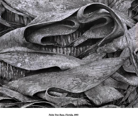 Palm Tree Base, Florida 1993 contemporary-artwork