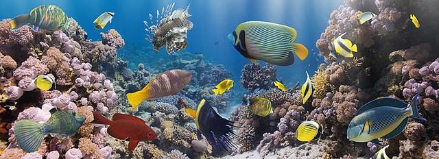 Coral Reef Panorama Wall Mural -- Self-Adhesive Wallpaper by MagicMurals contemporary-wallpaper