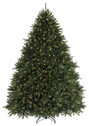 Majestic Balsam Fir Christmas Tree traditional-christmas-trees