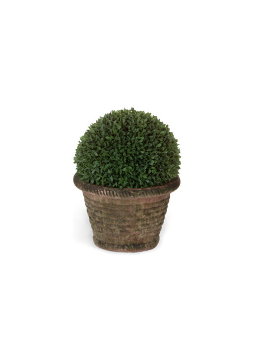 Boxwood Ball Topiary -