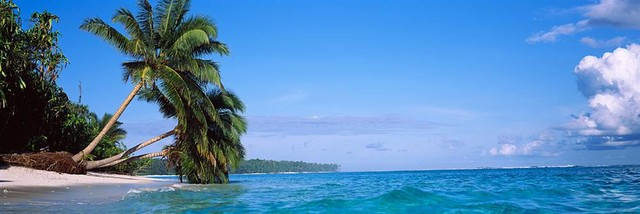 Palm Trees On The Beach Indonesia Panoramic Fabric Wall