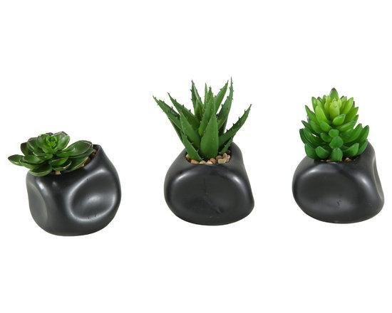D&W Silks - D&W Silks Set Of 3 - Mixed Echeveria, Aloe And Succulents In Matte Black Ceramic - Set of 3 - Mixed echeveria, aloe and succulents in matte black ceramic