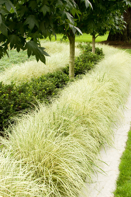Variegated japanese sedge asian plants by monrovia for Low mounding ornamental grasses