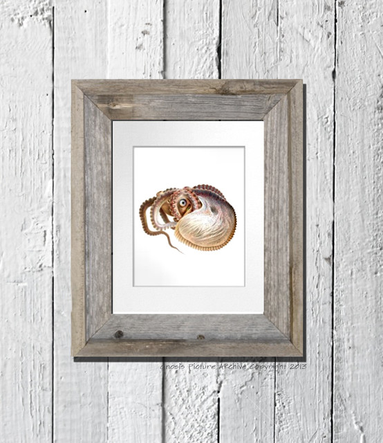 Octopus cephalophod print no.10 Beach House / Kids Room / Bathroom