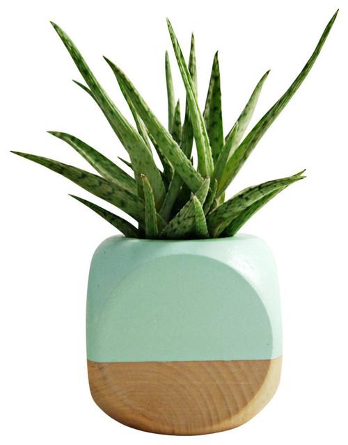 Geometric succulent cactus planter mint wood for Wooden cactus planter