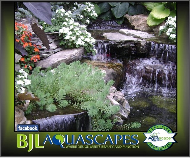 Small detailed Backyard Pond Ecosystem - Traditional ...