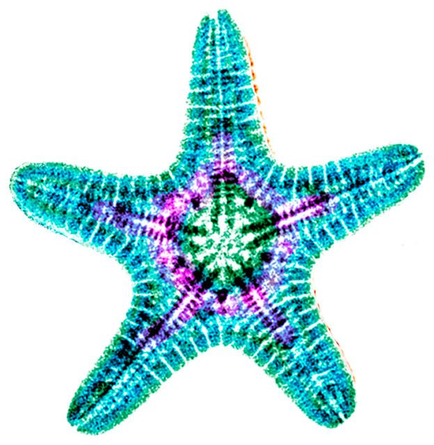 X-ray Photography Starfish Under Acrylic - Beach Style - Fine Art Prints - by Radiant Art Studios