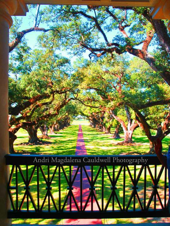 Oak Alley Plantation, Wall Art Photography-Available in Multiple Sizes - Andri Magdalena Cauldwell
